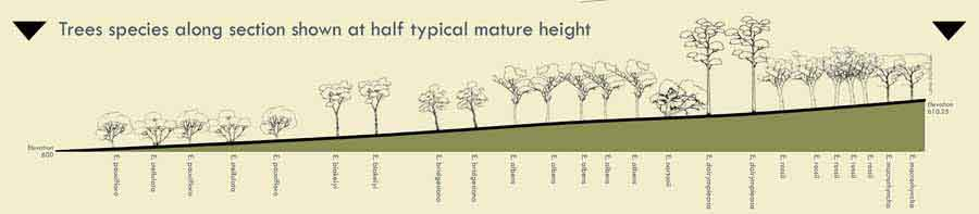 Prediction of tree heights on the section shown on the map above